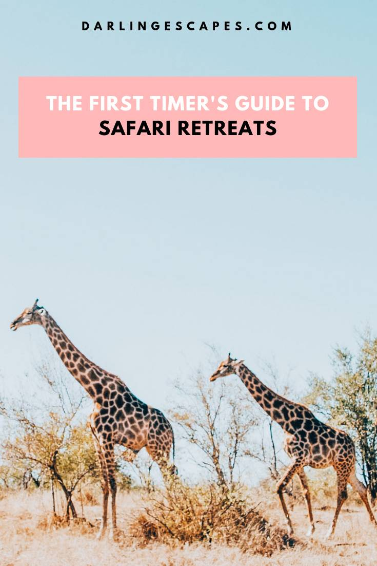 All the reasons why an African safari should be on your bucket list.