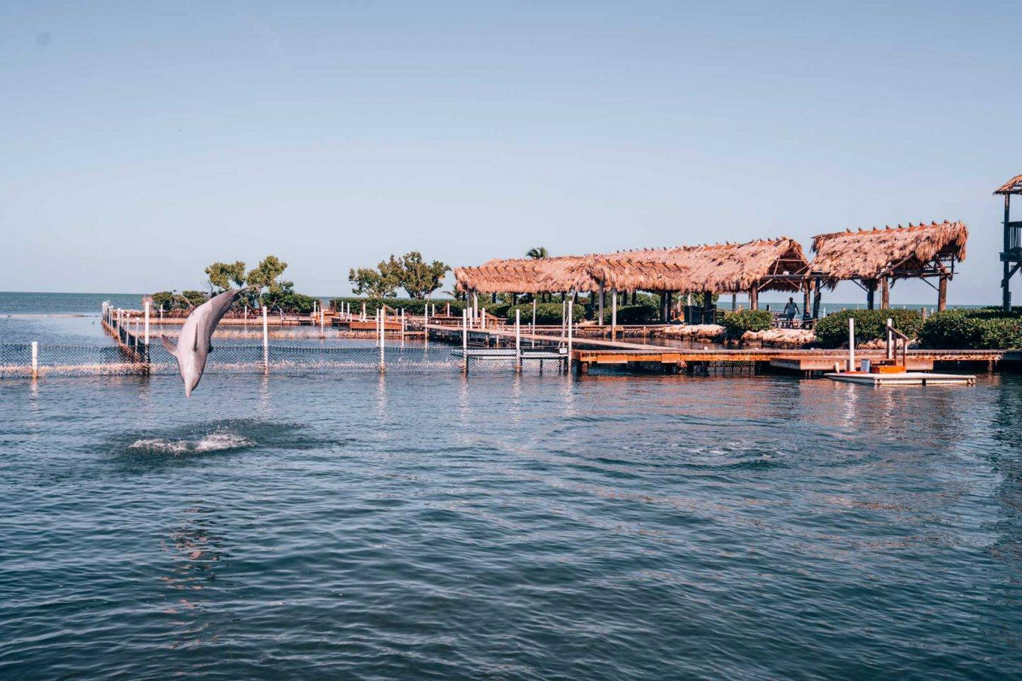 The dolphin research centre in Islamorada is worth stopping by and one of the best things to do in Florida Keys.