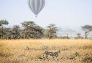 Tanzania's Serengeti is without question one of the best spot for a safari in Africa