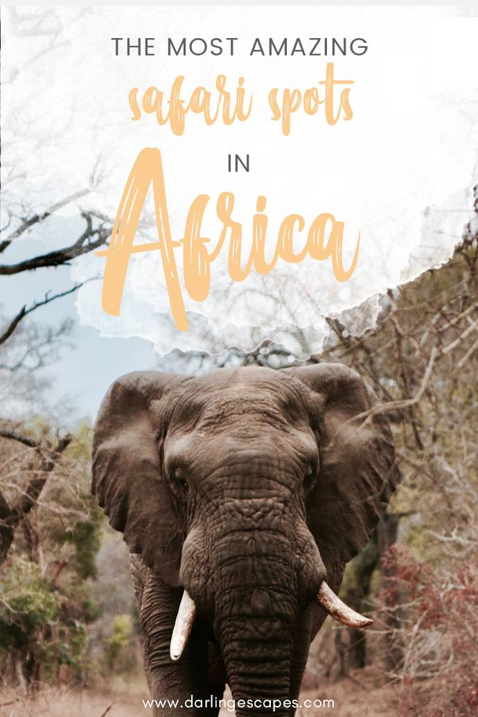 Get inspired with this list of the most amazing safari spots in Africa