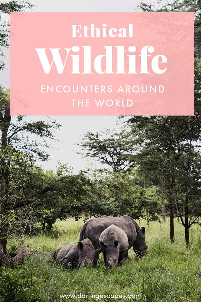Incredible (and Ethical) Wildlife Experiences Around the World