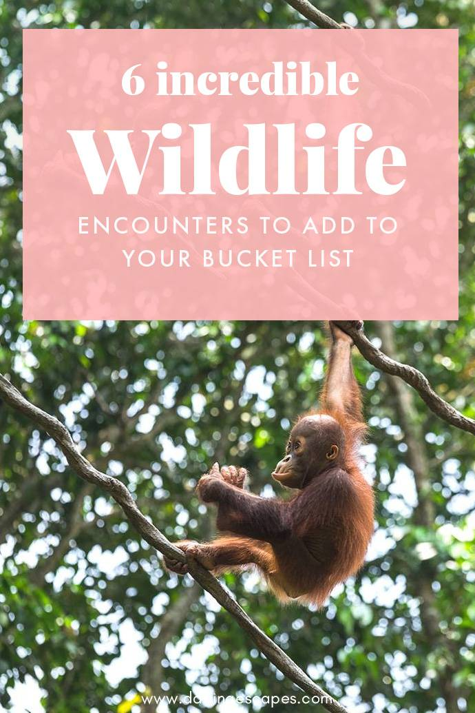 Looking for the best wildlife experiences around the world? We've got six incredible bucket list ideas for you!