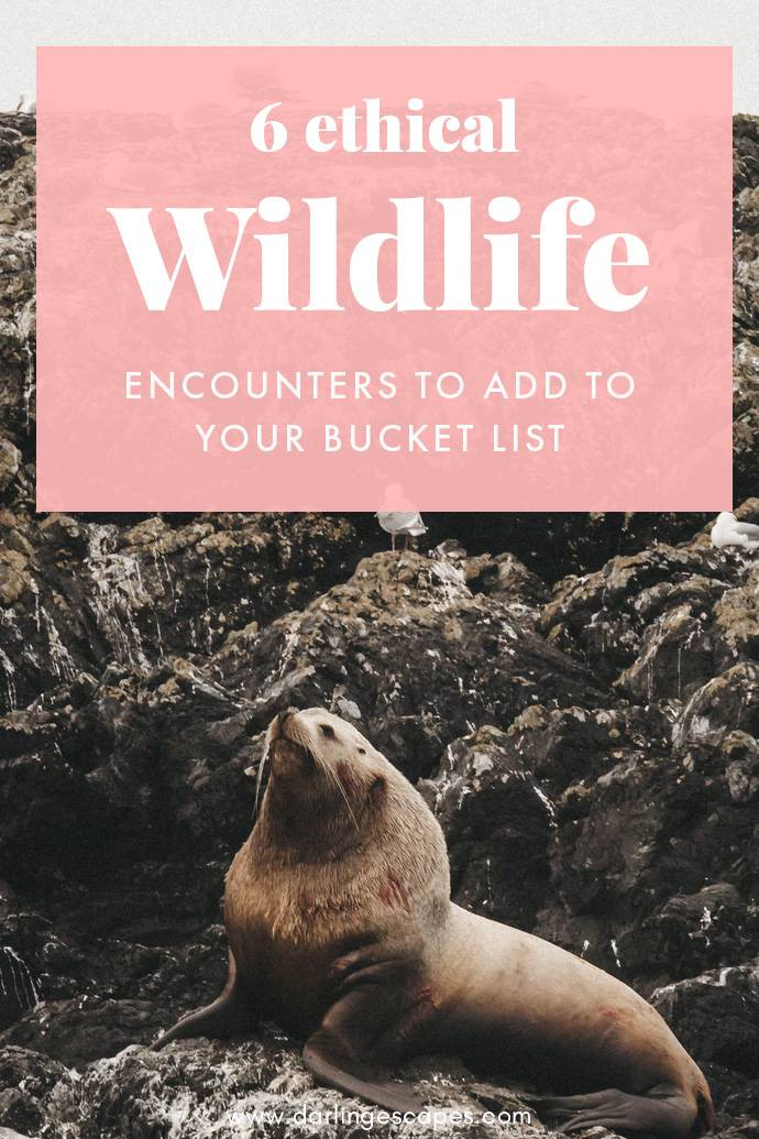 From gorillas in Rwanda to sea lions in South America, we've got the ultimate list of ethical wildlife experiences to have around the world!