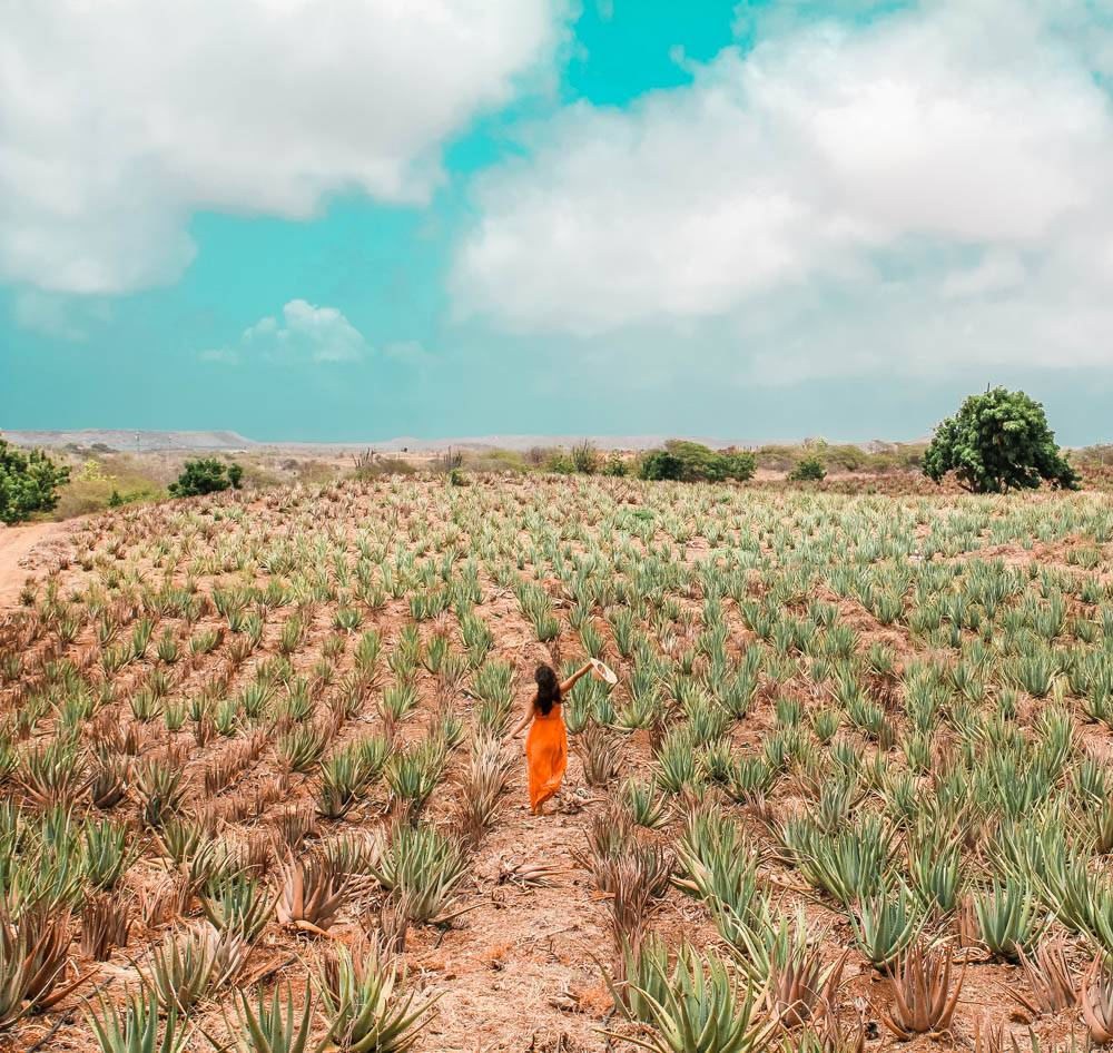 Exploring agave fields in Curacao is a must on any girls' trip to Curacao!